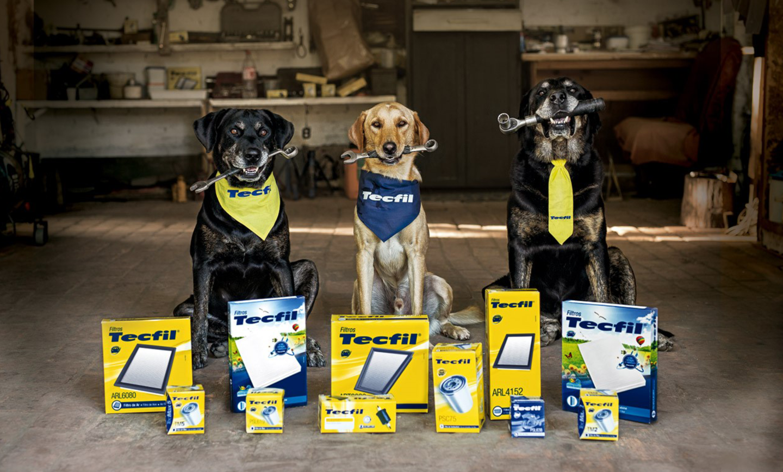 Bidu, Diana e Fritzz, os cães inteligentes da TECFIL
